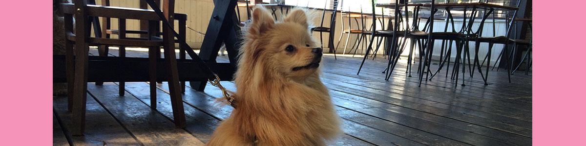 犬の保育園 看板犬