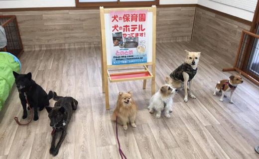 町田市の犬の保育園・犬のホテル