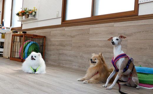 安心して預けられる犬のホテル