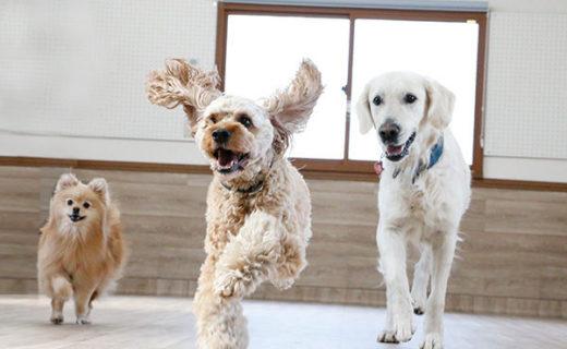 犬の保育園で遊ぼう